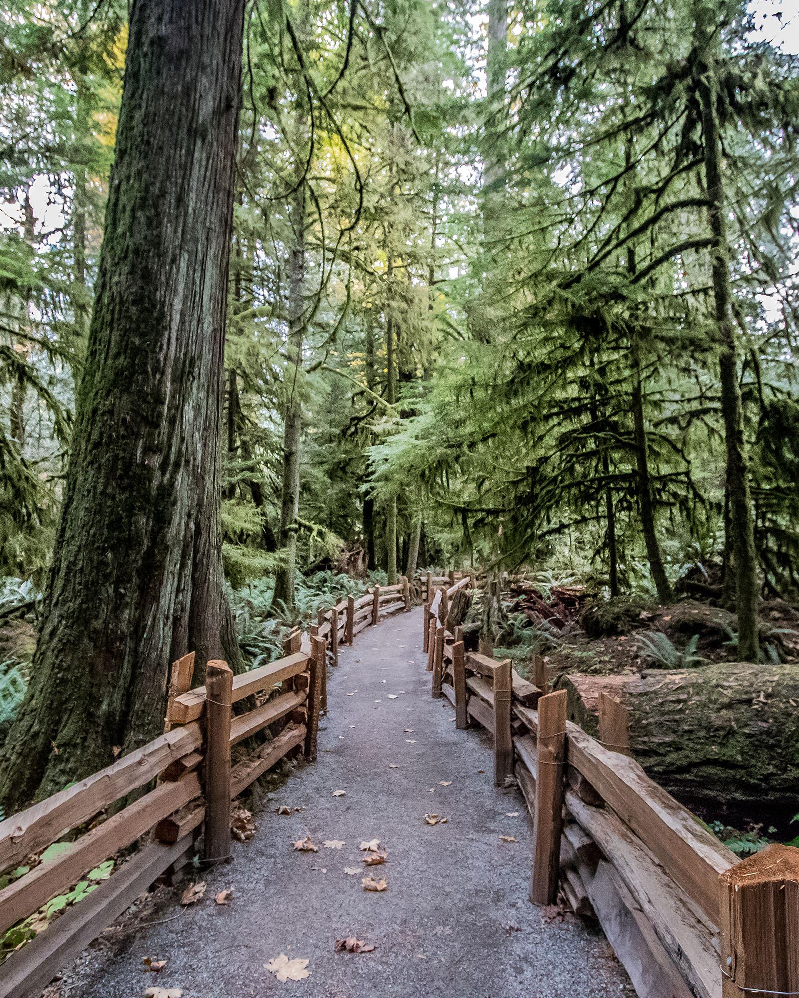 Cathedrale Grove - Road Trip - Île de Vancouver